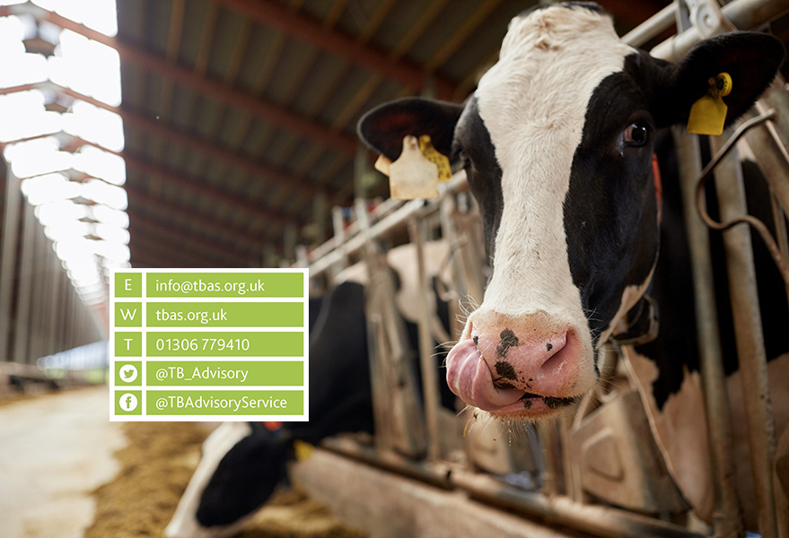 TBAS cow Contact Us